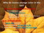 why do leaves change color in the fall3