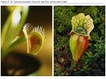 figure 37 16 carnivorous plants venus fly trap left pitcher plant right