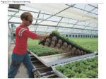 figure 37 4 hydroponic farming