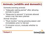 animals wildlife and domestic