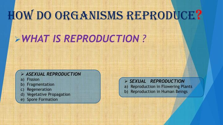 how do organisms reproduce n.