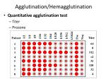 agglutination hemagglutination
