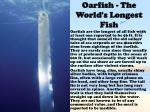 oarfish the world s longest fish