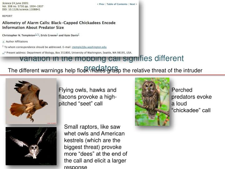 Variation in the mobbing call signifies different predators