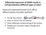 differential expression of genes results in cell specialization different types of cells
