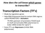 how does the cell know which genes to transcribe