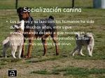 socializaci n canina