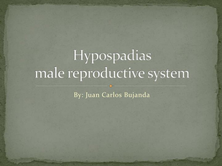 hypospadias male reproductive system n.