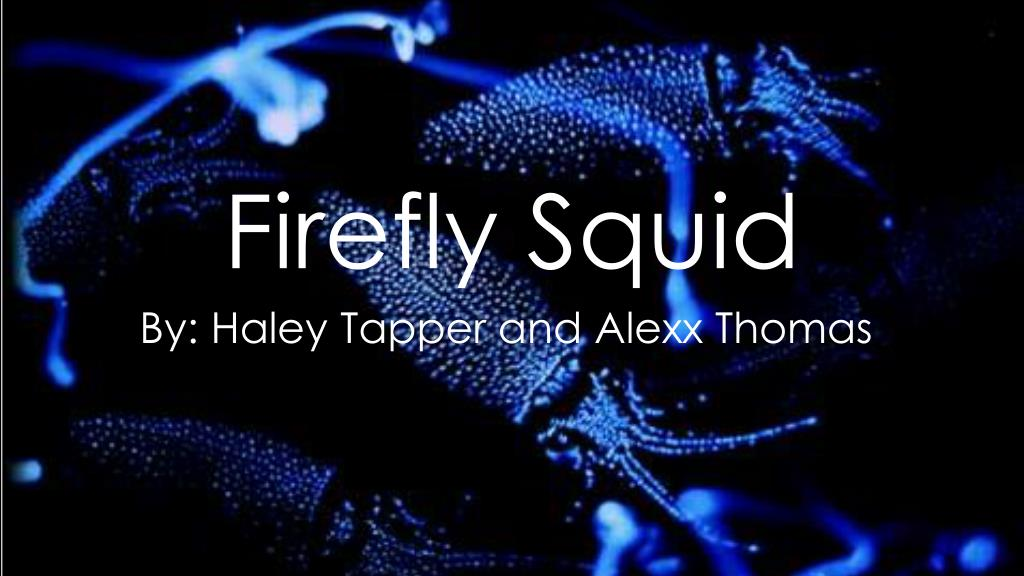 PPT - Firefly Squid PowerPoint Presentation, free download ...