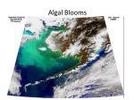 algal blooms1