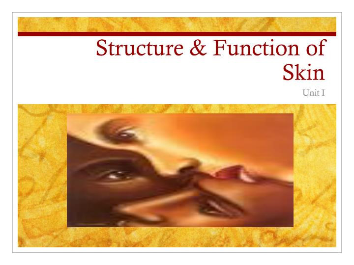 structure function of skin n.