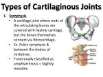 types of cartilaginous joints1