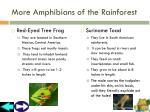 more amphibians of the rainforest
