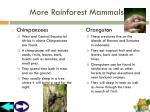 more rainforest mammals