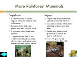 more rainforest mammals1