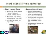 more reptiles of the rainforest