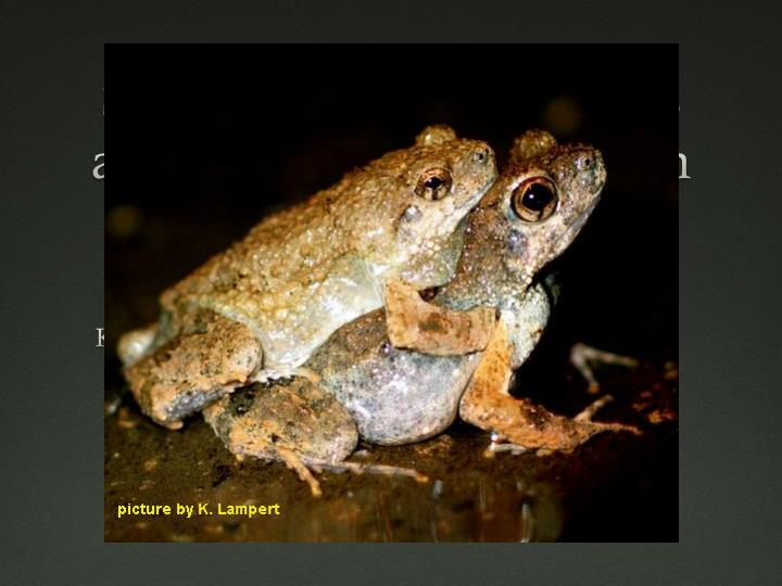 signal perception in frogs and bats and the evolution of mating signals n.