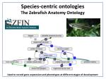 species centric ontologies the z ebrafish anatomy ontology