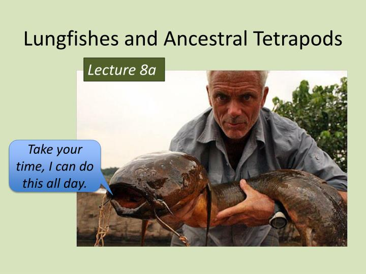 lungfishes and ancestral tetrapods n.