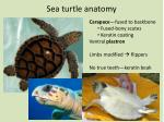 sea turtle anatomy