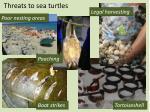 threats to sea turtles1