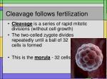cleavage follows fertilization