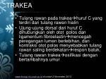 trakea1