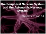 the peripheral nervous system and the autonomic nervous system