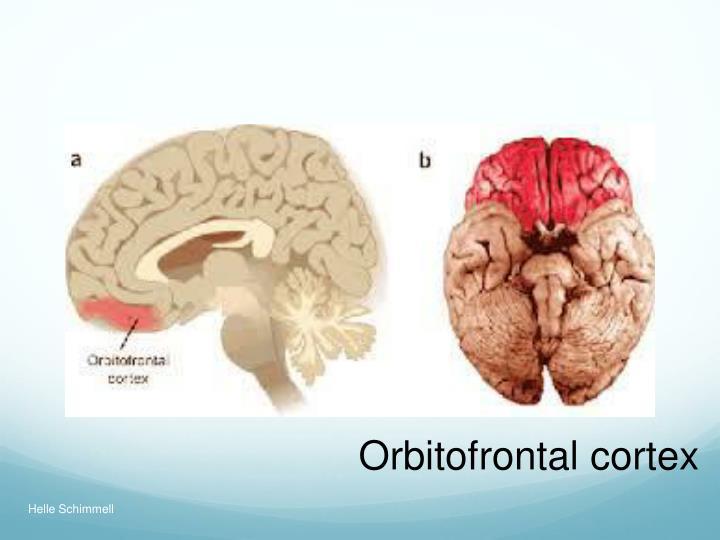 Orbitofrontal cortex