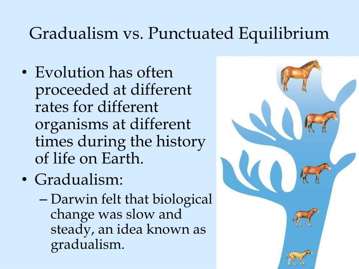gradualism versus punctuationism Gradualism versus punctuationism although modern evolutionists are thought to be divided on the issues surrounding evolutionary theory, a close look at the evidence suggests that both the gradualist school of thought and the punctuationist school of thought share many characteristics in common.