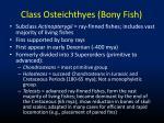 class osteichthyes bony fish1