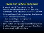 jawed fishes gnathostomes