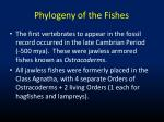phylogeny of the fishes