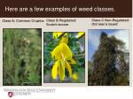 here are a few examples of weed classes