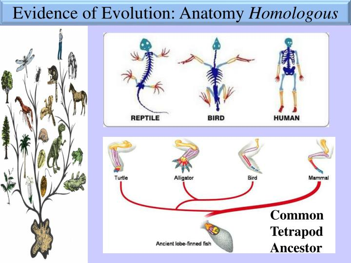 Ppt Learning Target Evidence Of Evolution Powerpoint