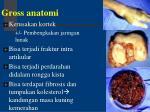 gross anatomi