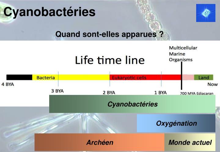 Cyanobact ries2