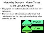 hierarchy example many c lasses make up one phylum