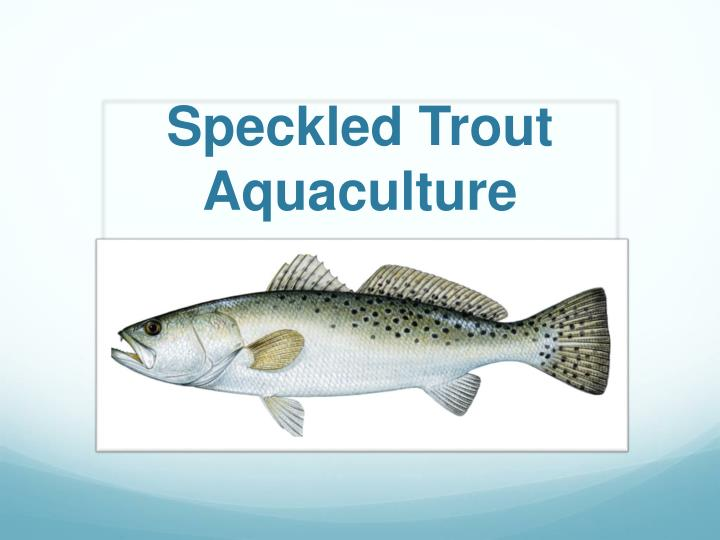 speckled t rout aquaculture n.