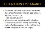 fertilization pregnancy