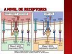 a nivel de receptores