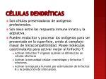 c lulas dendr ticas1