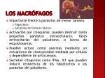 los macr fagos