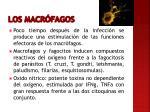 los macr fagos1
