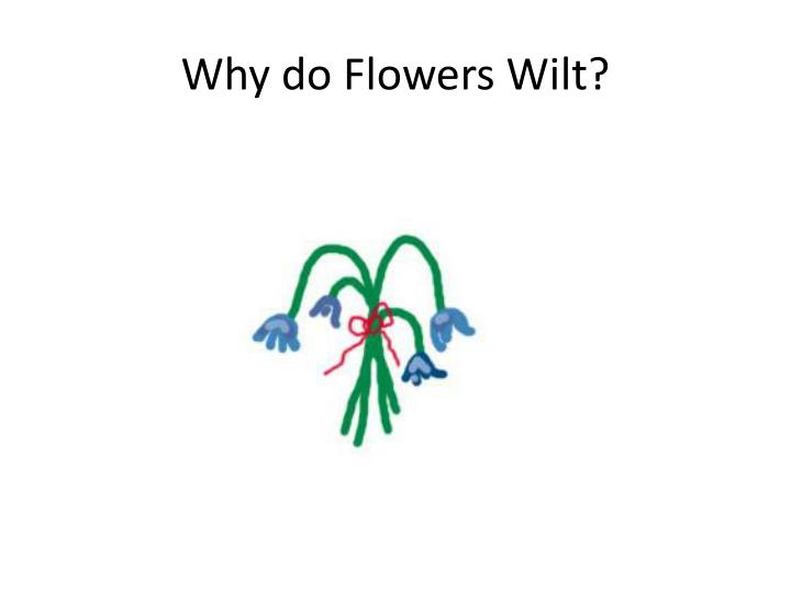 why do flowers wilt n.