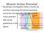 muscle action potential1