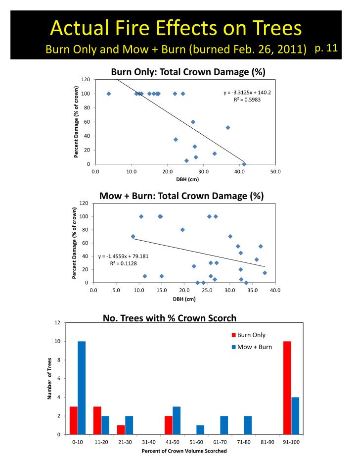Actual Fire Effects on Trees