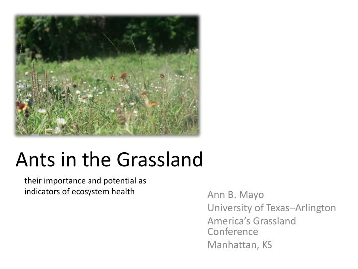 ants in the grassland n.