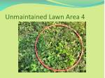 unmaintained lawn area 4