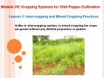 module vii cropping systems for chili pepper cultivation10